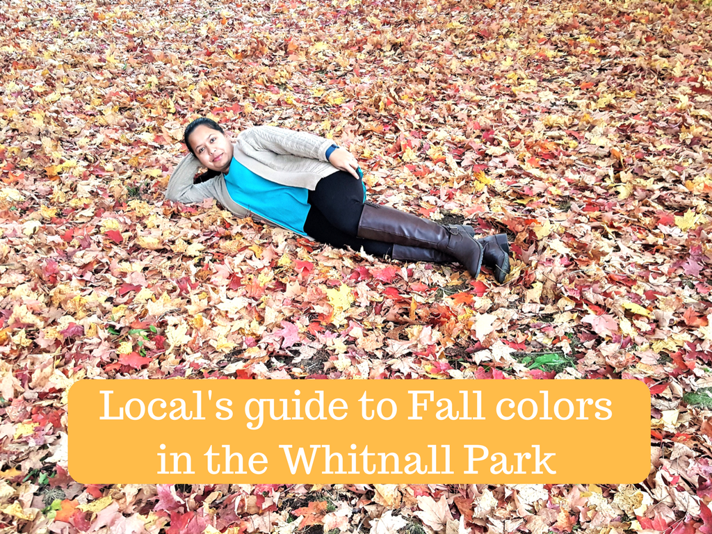 Local's guide to Fall colors in the Whitnall Park