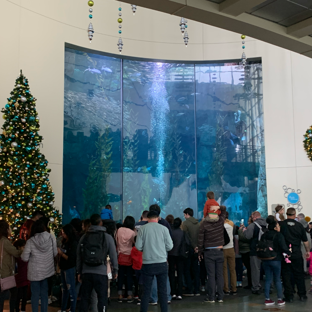 Crowd at aquarium of the Pacific