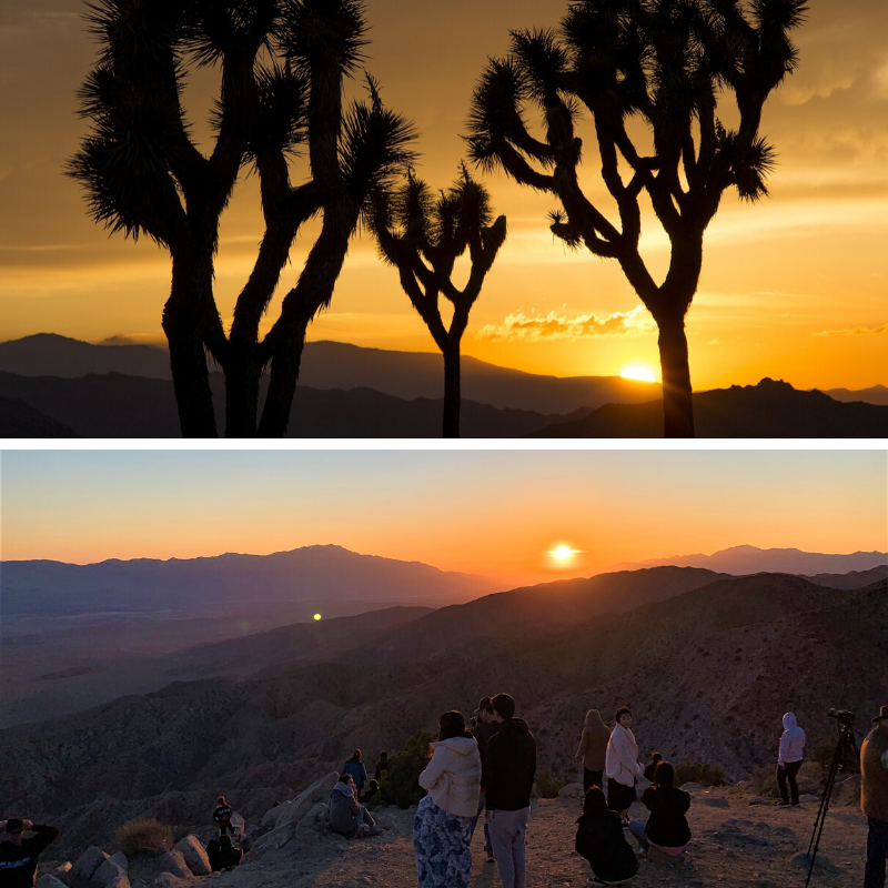 sunset at Joshua Tree National Park